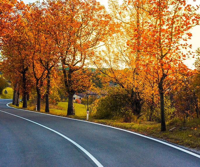 Nos conseils pour conduire en automne
